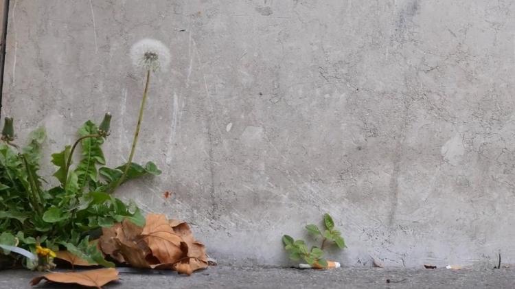vlipp - Pour retrouver la nature en ville