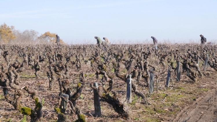 vlipp - Le trésor des vignes